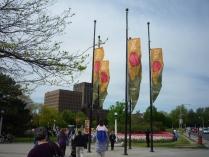 Tulip Festival, 15 de maio de 2009.