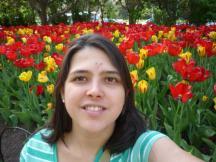 As tulipas